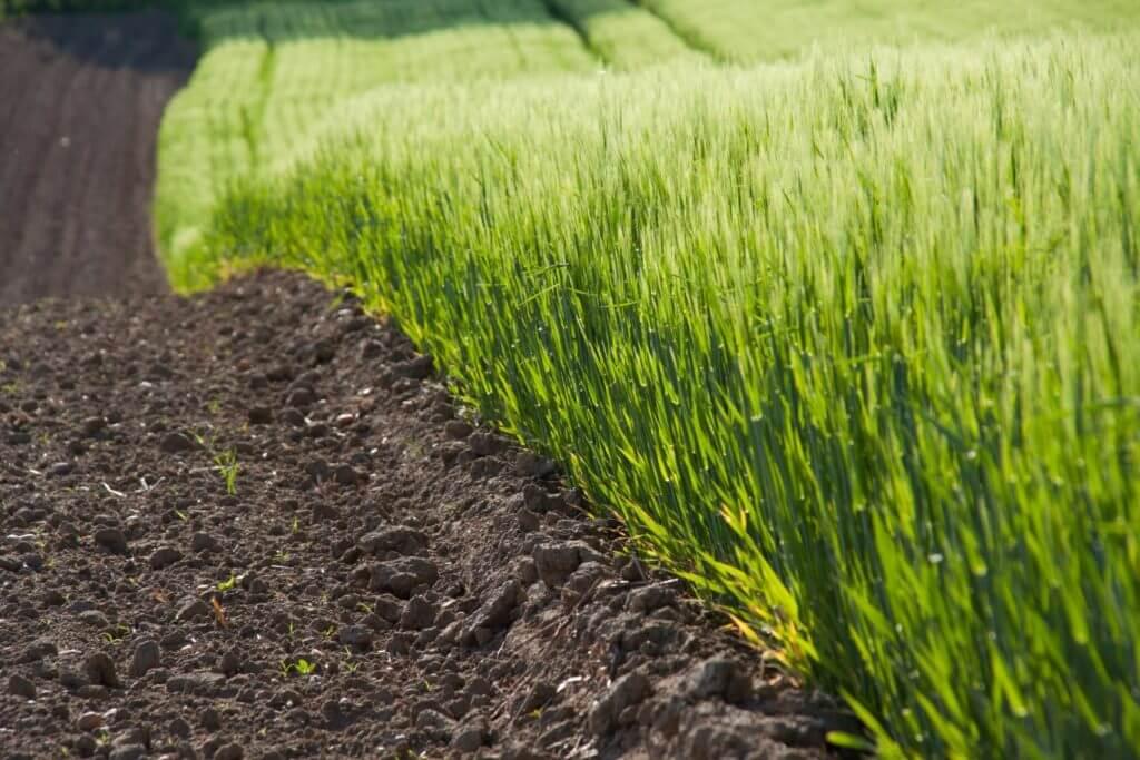 erba-verde-con-terra (Grande)