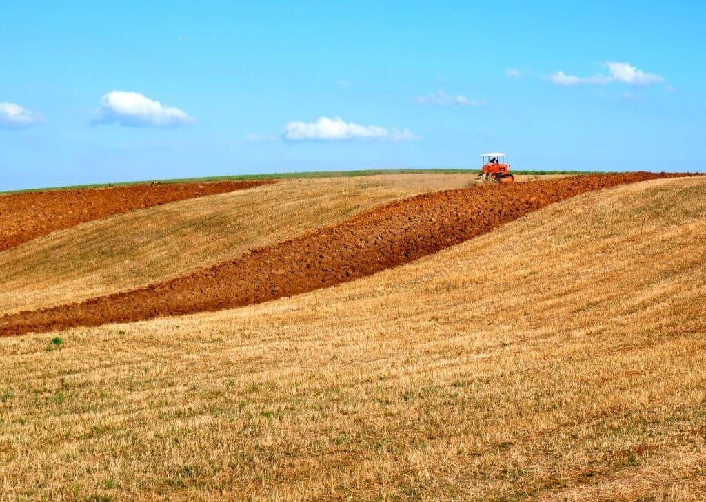 paesaggio-coltivato-cielo-azzurro (Grande)