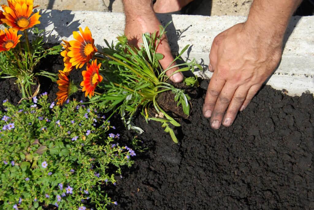 fiori-piantati